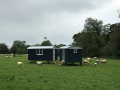 Shepherd hut - Sheep