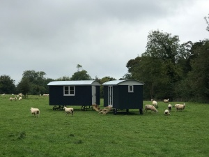 Shepherd hut - Sheep